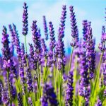طب سنتی و گیاهان دارویی, Drug Med