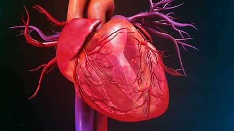 آیا مصرف خوراکی قارچ برای سلامت قلب و عروق مفید است؟