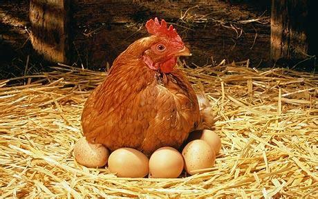 تاثیر مصرف تخم مرغ بر نرخ بیماری های قلبی و عروقی, Drug Med: مجله ی فوق تخصصی دارو، پزشکی، تشخیص و کرونا ویروس ۱۹
