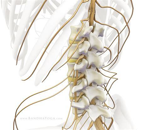 رابطه درد کمر با مشکل در کانال نخاعی, Drug Med: مجله ی فوق تخصصی دارو، پزشکی، تشخیص و کرونا ویروس ۱۹